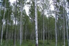 2005_baltikum_256